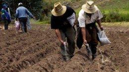 Desarrollo de tecnología ayuda a productores a eficientar sus cultivos | Foto: Especial