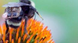 Prototipo de mochila con sensores en abeja | Foto: Fayer Wayer