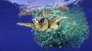 Tortuga atrapada en una red | Foto: Especial