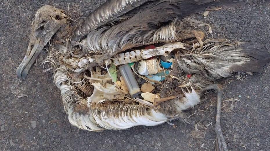 Restos de un ave que en su interior guardaba el plástico que consumió | Foto: Especial
