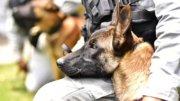 Operativo con binomios caninos | Foto: Especial