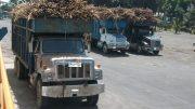 Camiones cañeros de Colima | Foto: especial