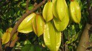 Árbol de fruto de Carambolo | Foto: especial
