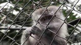 Animal en cautiverio | Foto | Especial