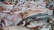 Imagen ilustrativa de pescado | Foto: especial
