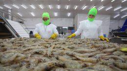 China informó que suspendió las importaciones de camarón proveniente de Ecuador luego de detectar coronavirus en cargamentos recientes de este producto.  Foto Especial.