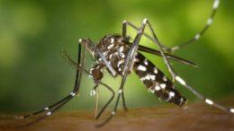Los repelentes naturales contra insectos son muy utilizados sobre todo en estas épocas de lluvia y calor, sobre todo si se quiere evitar el uso de insecticidas que pudiera afectar la salud.