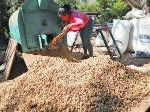 La venta de cacahuate en crudo, es uno de los principales ingresos de las personas de la comunidad de Piscilia, en Colima, Estado del mismo nombre.