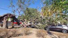 Los hechos ocurrieron la tarde de este miércoles sobre la avenida Pablo Silva de Villa de Álvarez, cuando un árbol viejo se rompió del tronco y cayó sobre dos autos.