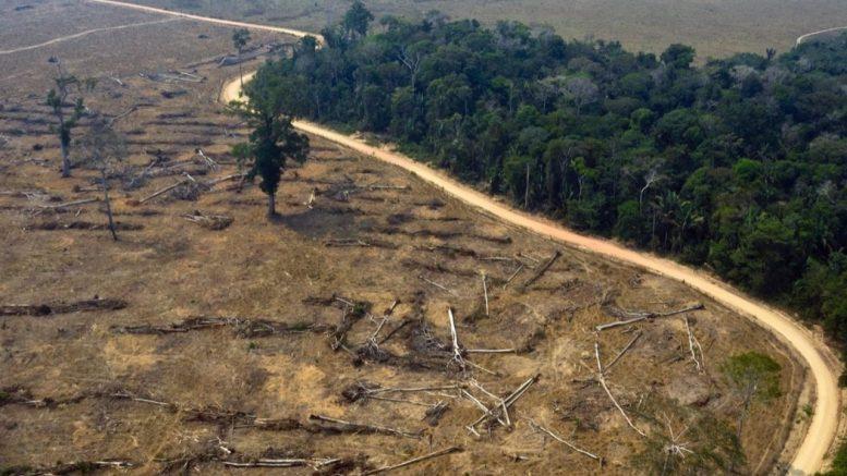 Las emisiones de carbono por la pérdida de cobertura forestal, a nivel global fue de 2.64 gigatoneladas de dióxido de carbono (Gt CO2), que equivalen a las emisiones anuales de 570 millones de vehículos en circulación, 16 veces el padrón de automóviles registrados en la República Mexicana.